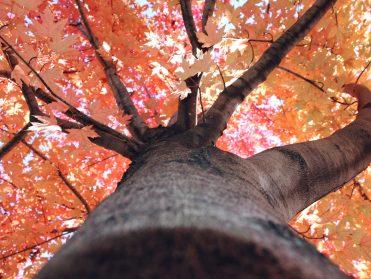tree-of-life-laporte
